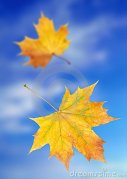 yellow-autumn-leaves-11495026